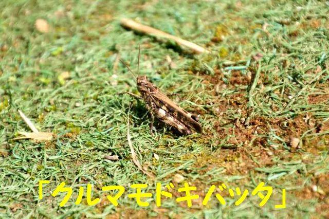JPG_1814.jpg