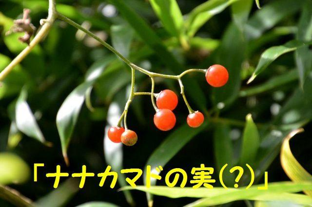 JPG_1815・・・.jpg