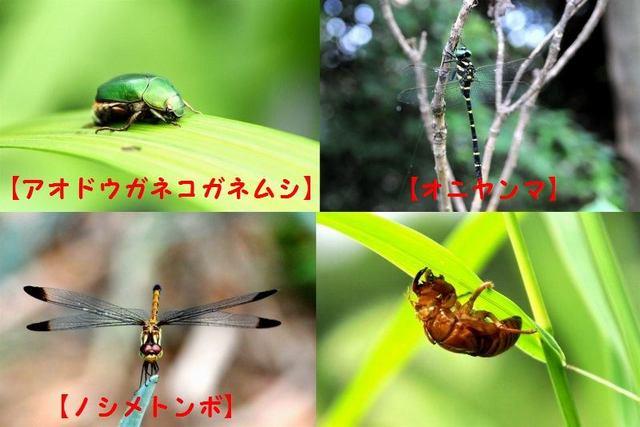 8.DSC_7318.jpg