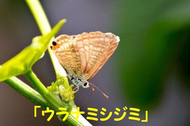JPG_1786.jpg