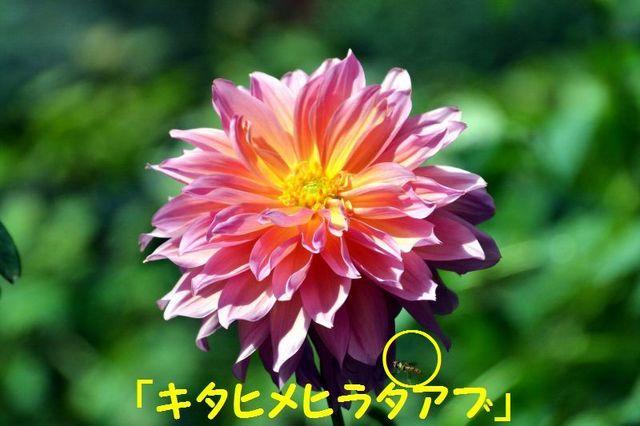 JPG_1911.jpg