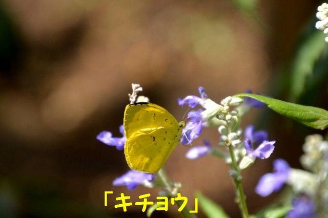 JPG_1951.jpg